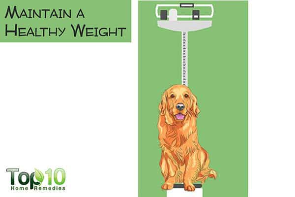 mintain healthy weight in older dogs