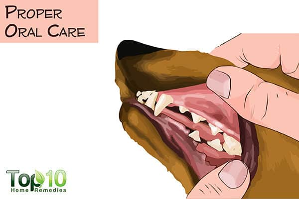 proper oral care for aging dogs