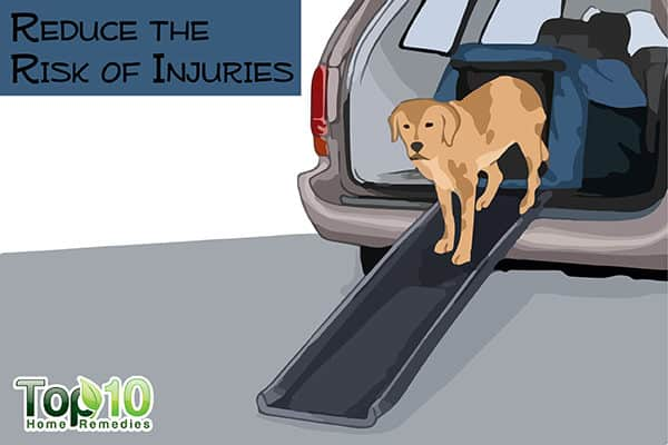 reduce the risk of injuries in your older dog