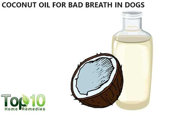 coconut oil for dogs with bad breath