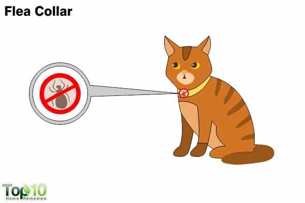flea collar to get rid of fleas on cats
