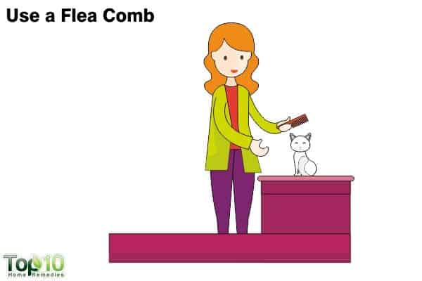 flea comb to remove fleas on cats