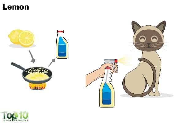 lemon to get rid of fleas on cats