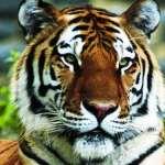 Top Ten Amazing Animal Videos on Youtube