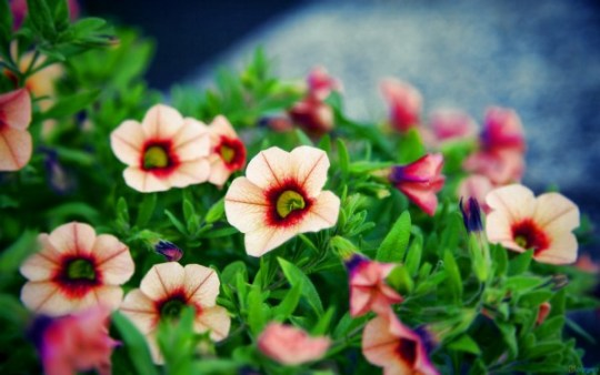These Small Flowers Are Insanely Beautiful  50 PHOTOS  Beautiful Small Flowers
