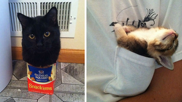 If It Fits I Sits These 17 Cats Prove That No Space Is
