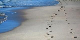 Top 3 Beach Walks on the Gold Coast