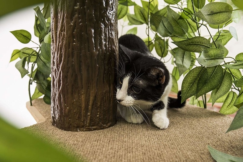 Best Cat Trees Smart Buyers Guide - CatHaven Cat Condo Tree