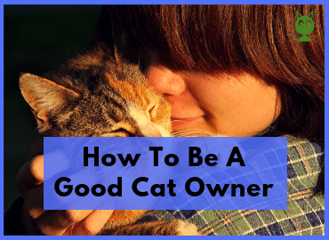 How To Be A Good Cat Owner Feature Image (Canva)