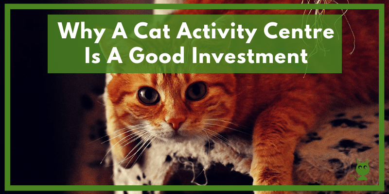 Why A Cat Activity Centr Is A Good Investment