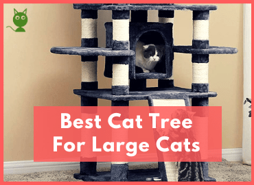 Best Cat Tree For Large Cats Page Image (Canva)