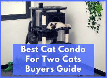 Best Cat Condo For Two Cats Page Image