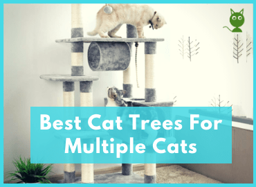 Best Cat Trees For Multiple Cats Post Page Image (Canva)