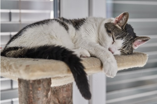 How to Create a Positive Environment for Your Cat