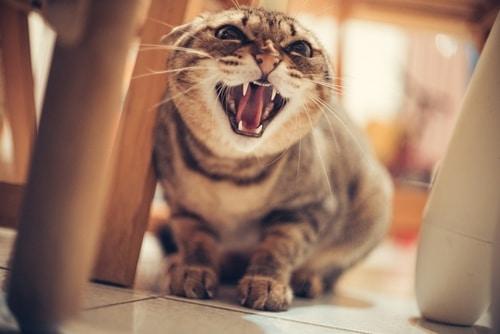 Reading Your Cat's Body Language