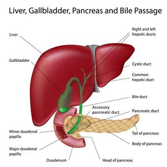 Ill Effects on the liver