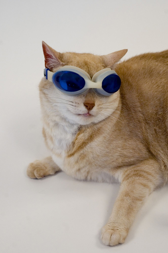 22 Photos Cute Cats With Sunglasses