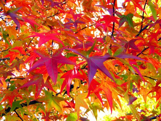 Wonderful Pictures of Autumn Leaves and Autumn Wallpapers