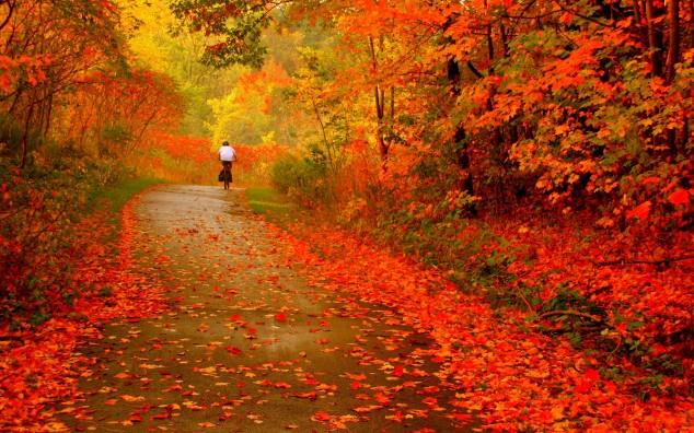 https://i2.wp.com/www.topdreamer.com/wp-content/uploads/2013/09/autumn-photography-image-11-634x396.jpg