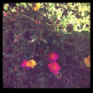 Blumenmeer daheim im Paradies