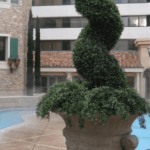 Commercial Size Topiaries Xlarge Large Topiaries Topiary Trees