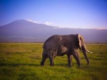 Tembo à l'assault du Kilimandjaro © Topich
