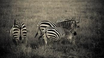 Prix du plus bel animal © Topich