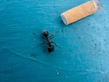 ... peut fumer ! © Yopich