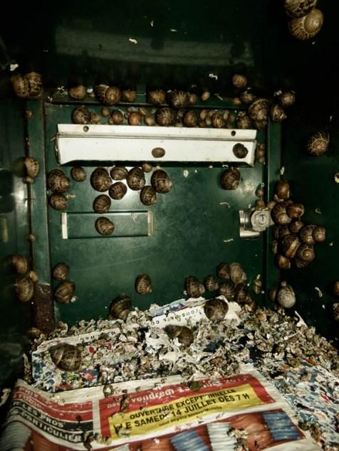 Véritable microcosme autarcique entre une d'escargots dégénérés qui - coincés ad vitam eternam dans cette boîte aux lettres - copulent toute l'année avec leurs frères et soeurs. © Topich