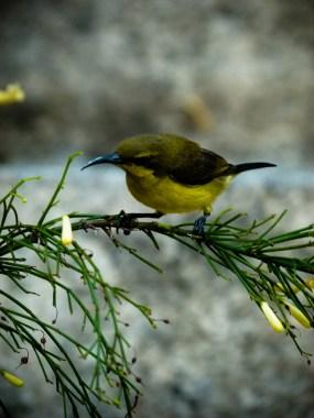 Mini colibri © Sandy