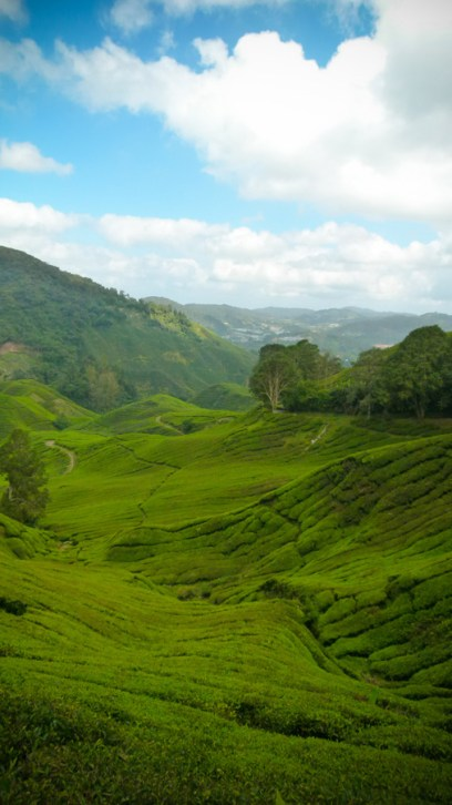 Cameron Highlands II © Sandy