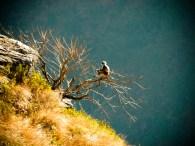 Auprès de son arbre... © Topich