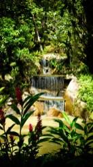 Tropical garden © Sandy
