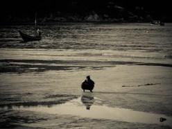 Ca trifouille © Topich
