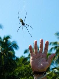 Je précise, ce n'est pas ma main mais celle de BenJ qui doit faire deux fois ma main. © Topich