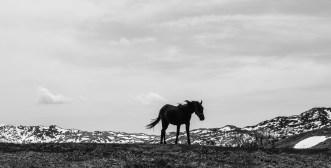 L'étalon noir © Topich