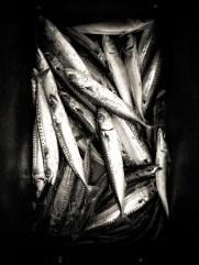 Pêcheurs d'élite © Topich