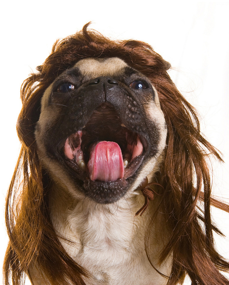 Top 10 Hilarious Dog With Wigs Top Inspired
