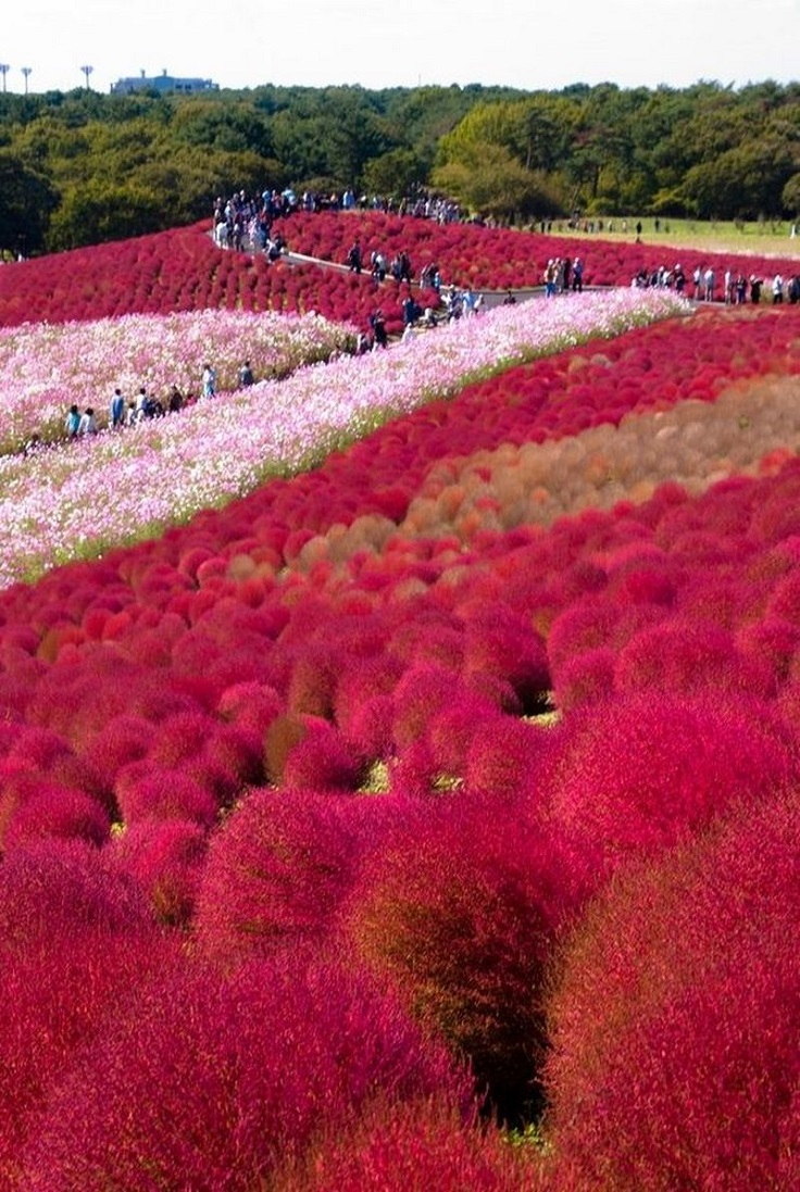 Top 10 Beautiful Places In Japan For Nature Lovers Top