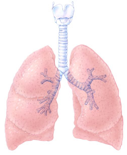 https://i2.wp.com/www.topnews.in/health/files/Lung.jpg