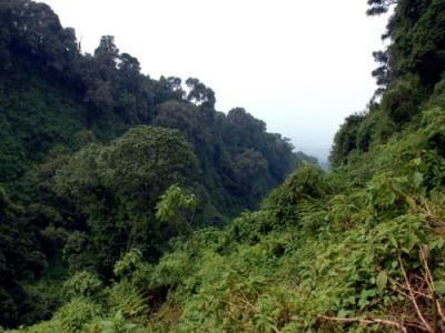 Команда антропологов обнаружила загадочное кладбище во время исследования руандийских джунглей. Поначалу ученые предположили, что наткнулись на останки древнего поселения, однако раскопки показали, что людьми и их бытом здесь и «не пахло».