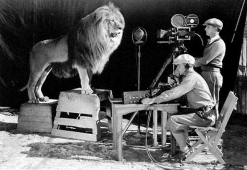 Операторы снимают рев льва для логотипа MGM.