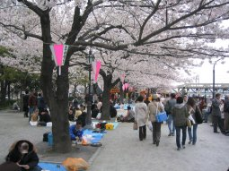Cherry blossoms on the waterfront in Asakusa. The first nice weekend after the blossoms come out is a traditional time for the Japanese to picnic under the cherry trees.
