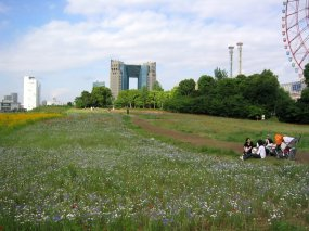 Spring time in Odaiba