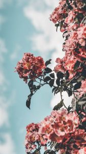 12 Floral iPhone Xs Wallpapers To
