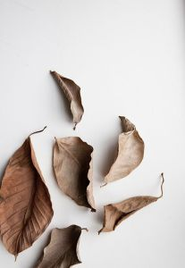 Autumn love with Bouroullec and