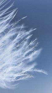 White Feathers H5 Background