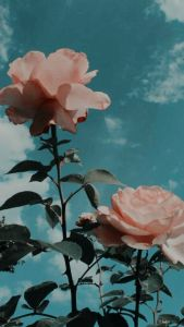 pink flowers #style