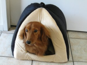 Indoor Pet House is Perfect Getaway Haven for little Pets - Small Dogs and Cats Can Relax in Warm Dome - Soft and Durable with Removable Cushion for Cleaning - Luxurious Pet Bed with Plush Exterior
