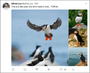 Twitter Multiple Images on Desktop